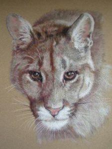 A Kingham - Puma