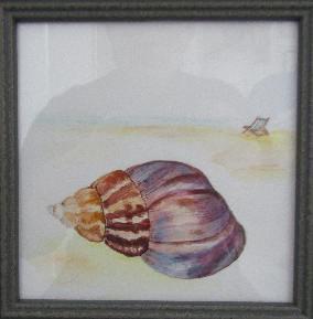 A Kingham Seashell