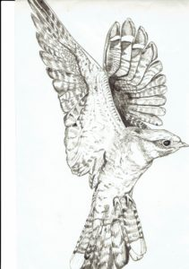 Bird bottom