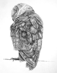 Charcoal Owl