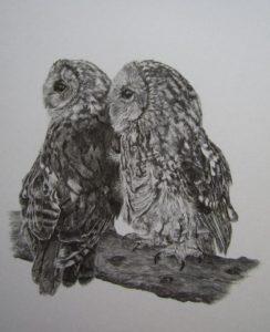 Owl Image resized