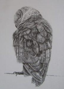 Owl single